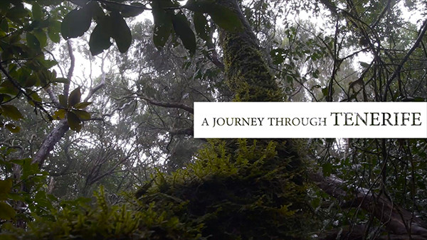 A JOURNEY THROUGH TENERIFE